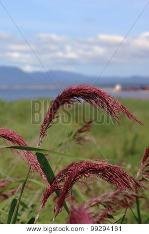 the reeds on the beach
