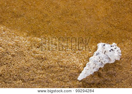 Sea Shell On The Sea Sand