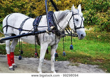 horse-drawn light-gray suit with apples