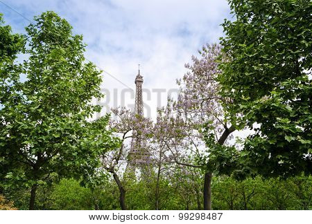 Eiffel Tower At Champ De Mars Garden In Paris
