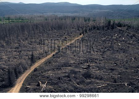 Dead trees in the Sumava National Park