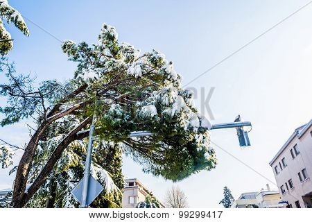 Snow Covered Tree Hangs Over The Road And Damages Traffic Lights