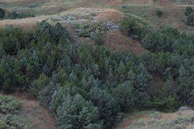 foto of juniper-tree  - Rocky Mountain Juniper  - JPG