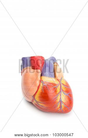Artificial Model Of Human Heart On White