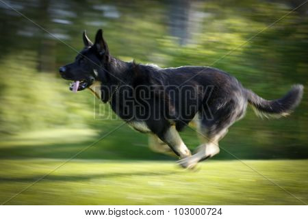 Motion blur of a running dog.