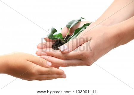 Female and child handfuls with soil and small green plant isolated on white