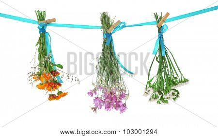Various herbs and flowers drying on thong on light background