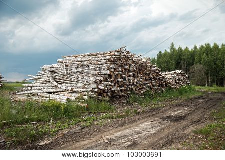 Trunks of trees cut and stacked in the foreground, green forest.