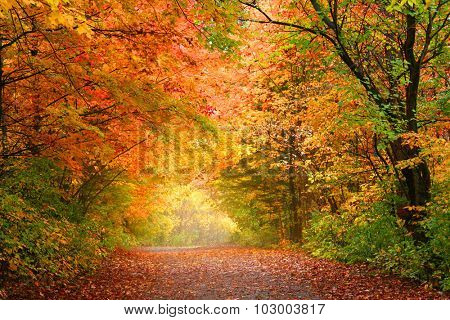 Bright autumn trees in Allegheny national forest