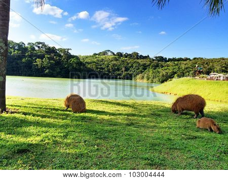 Animals around the lake