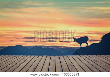 Wooden planks floor with silhouette of chamois in mountains in the background.