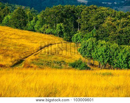 Summer hilly landscape