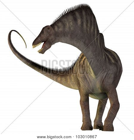 Amargasaurus On White
