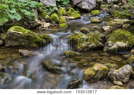 Forest River Flows Among  Mossy Stones.