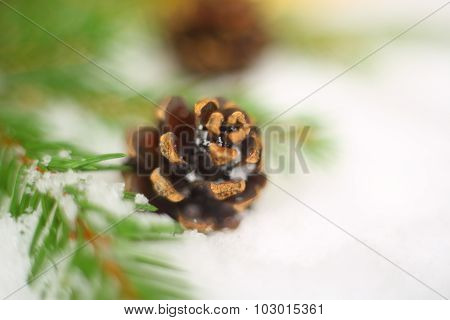 Fir And Cone On Snow