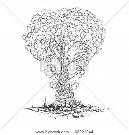 Sketch of one trees. Vector