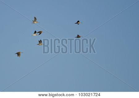 Flock Of Sandpipers Flying In A Blue Sky