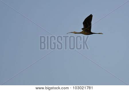 Single White-faced Ibis Flying In A Blue Sky