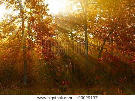 Sunlights in autumn forest