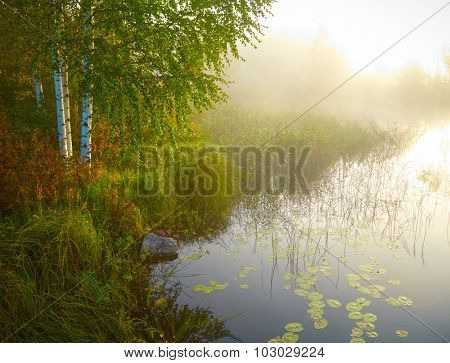 Landscape with birch, lake and green grass in morning lights. Finland