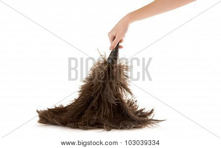 Feather Dusting