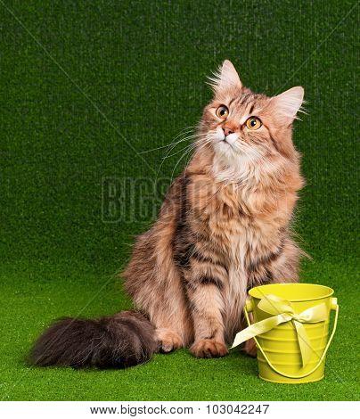 Beautiful adult cat on artificial green grass