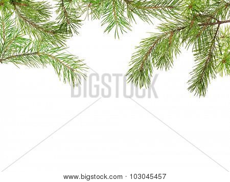 green pine branches isolated on white background