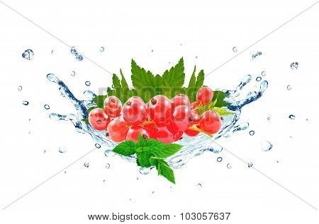 redcurrant splash