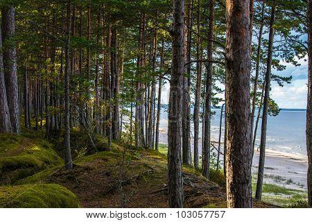 Latvian Coastal Forest and Beach