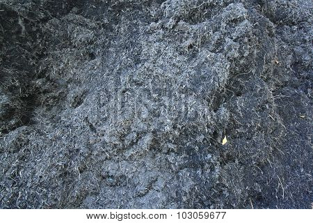 Soil In Garden With Dry Grass