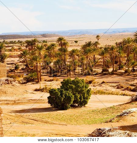 Sahara      Africa In Morocco  Palm The Old Contruction And  Historical Village