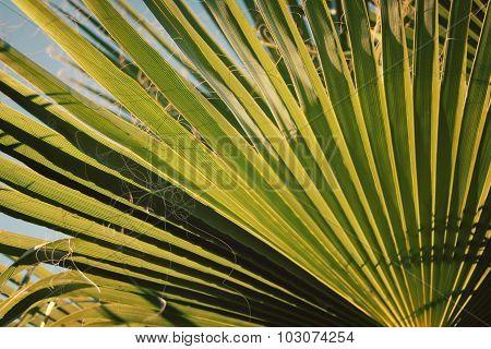 Palm Leaf Vintage Effect. Sunlight Falls Through.