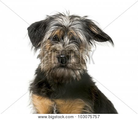 Mixed-breed puppy (5 months old)
