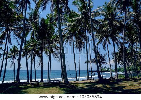 Palms On The Beach In Bali