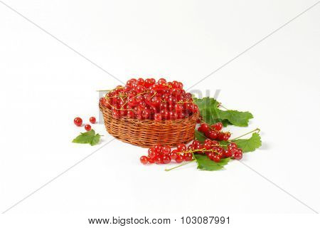 wicker basket full of freshly picket red currant