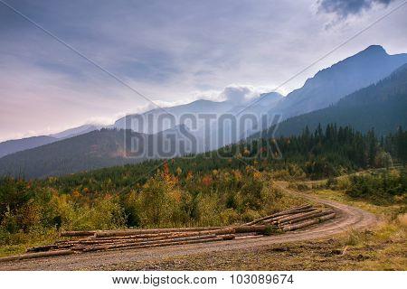 logging in Slovakia