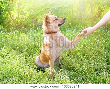Funny cute dog pressing his paw against woman hand, outdoors