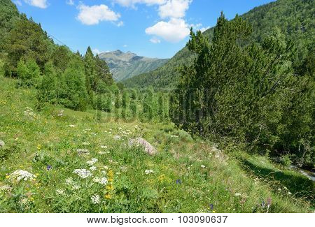 Alpine meadow covered with forest