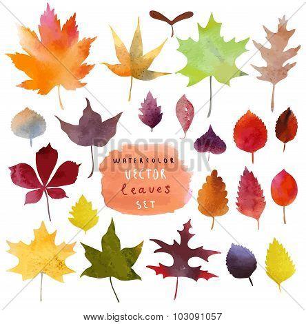 Watercolor set of beautiful colourful autumn leaves