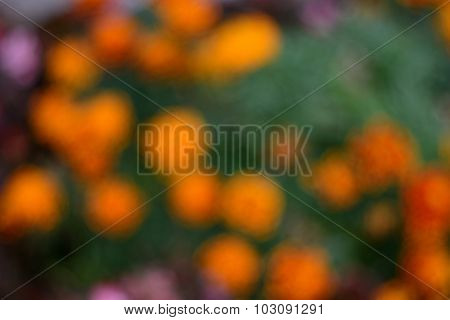 Background Blur Bright Flower Colors