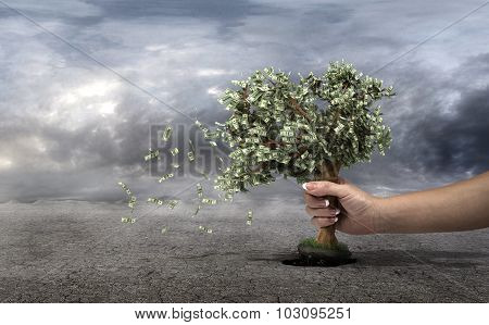 Concept Of Loss Your Money. Hand Picks The Money Tree Is Taken From The Earth On A Grey Clouds Backg