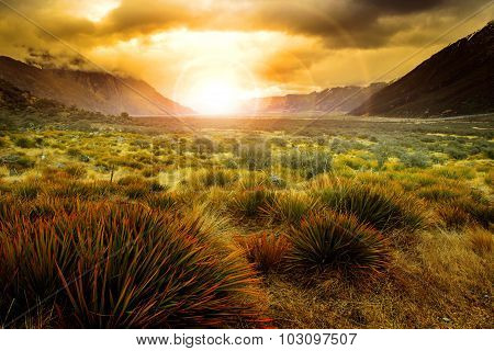 Sun Rising Behind Grass Field In Open Country Of New Zealand Scenery Use As Beautiful Natural Backgr