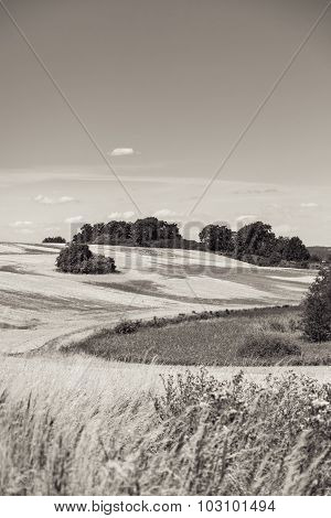Summer Landscape Of Field And Meadows And Blue Sky