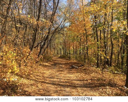 Trail, Covered Leaves In The Autumn Forest In The Foreground Birch