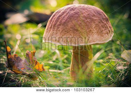 Fall Mushroom Forest Grass Sun