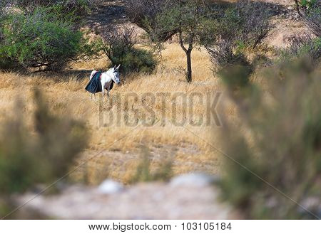 Donkey In An Olive Grove