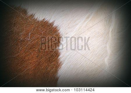 Texture Of Pony Fur