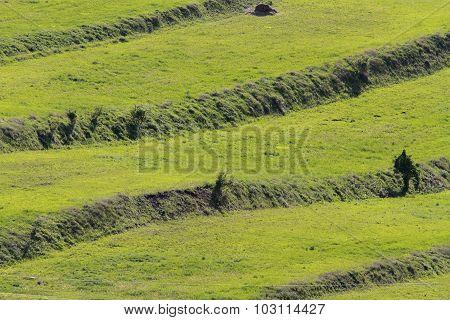 Textural Green Fields