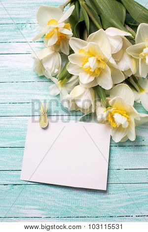 Background With Fresh Narcissus And Empty Tag