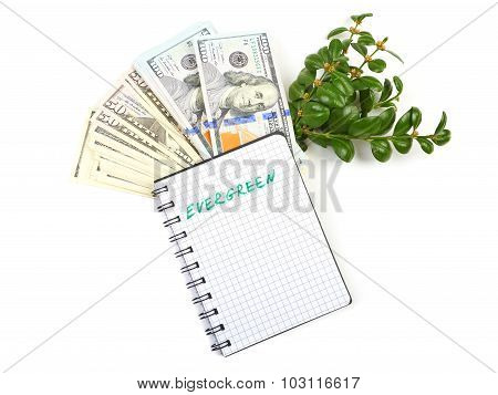 Hundred-dollar bills, a branch of green bushes and notebook on a